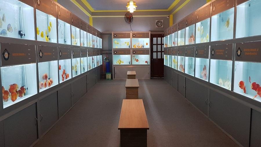 Cửa hàng cá cảnh lớn nhất thành phố hồ chí minh